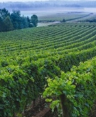 Grape-Escape-Wine-Tours