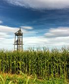 Lethbridge-Corn-Maze