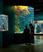 Shaw-Ocean-Discovery-Center